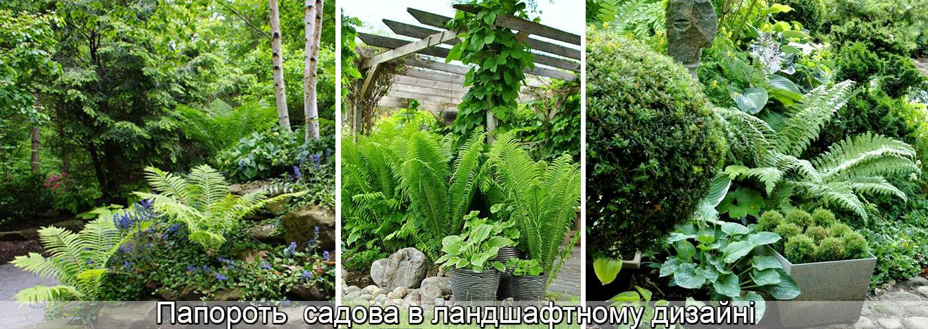 садові папороті вирощування, фото