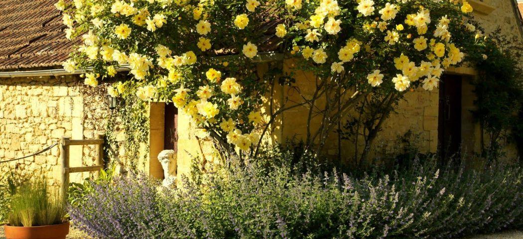 Плетистые вьющиеся розы, клаймбер и рамблер, фото