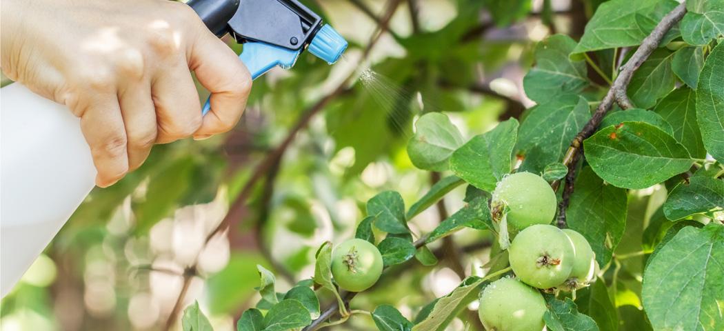 защита плодового сада опрыскивания препараты, фото