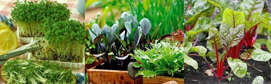 Як виростити зелень на підвіконні взимку, фото