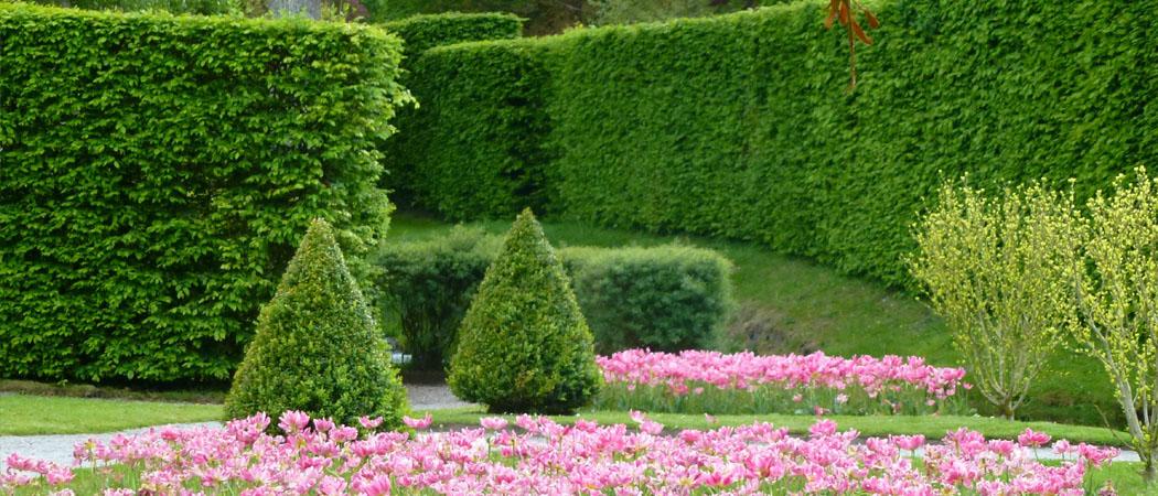 живя изгородь в саду, посадка, дизайн, фото