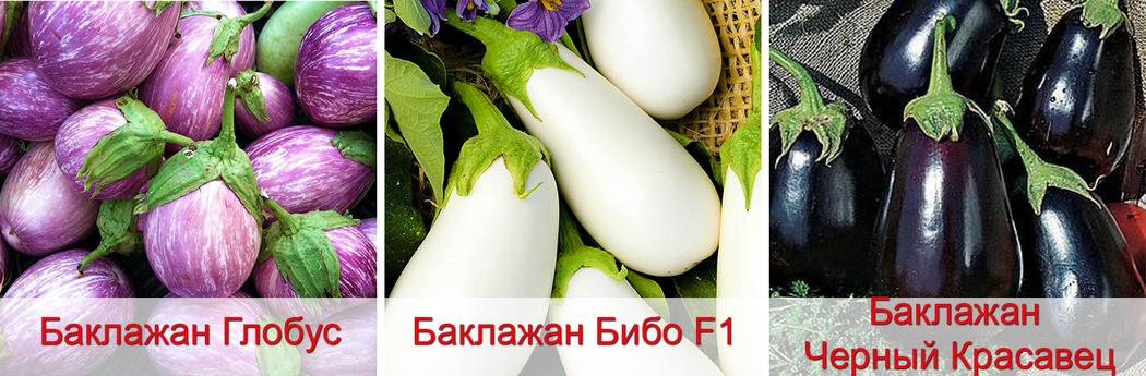 Сорта баклажанов семена рассада, фото