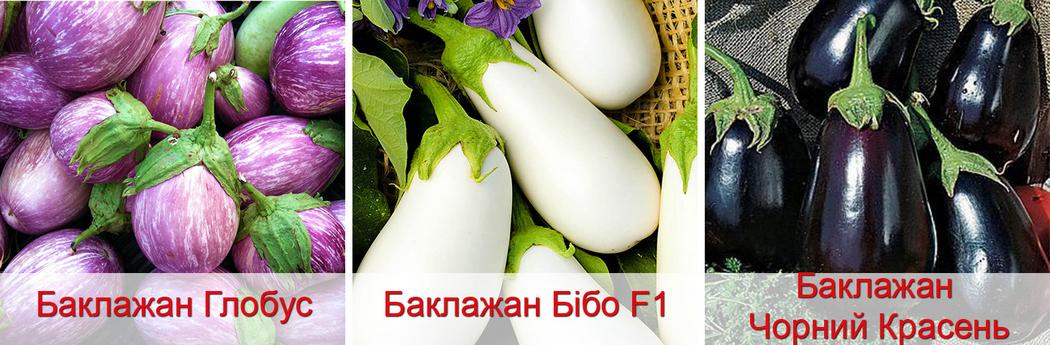 Як виростити розсаду баклажанів з насіння, фото