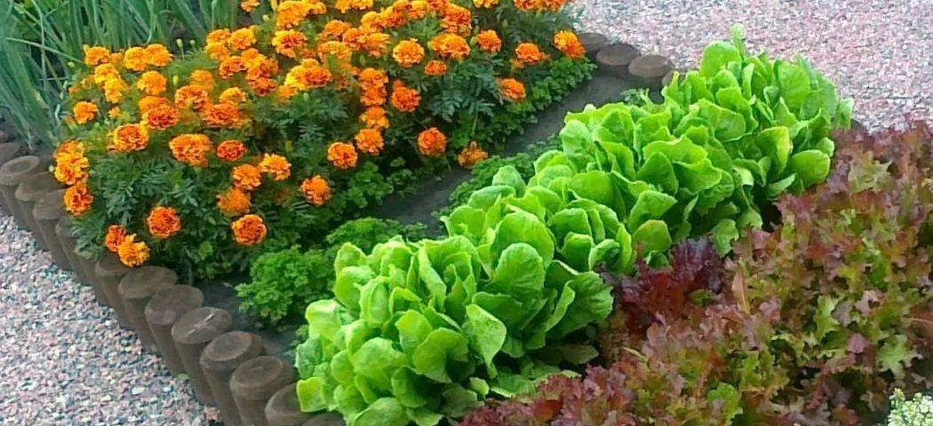 Квіти проти шкідників у городі, фото