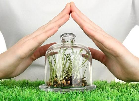 Защита растений от болезней, фунгициды, фото