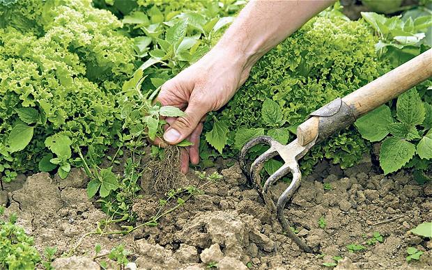 Борьба с сорняками в саду и огороде гербицидами. Фото