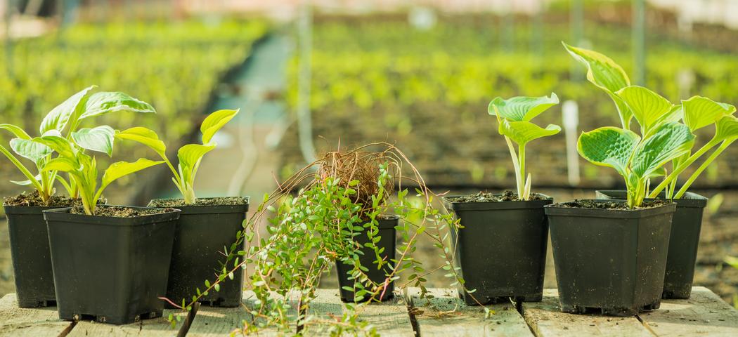 Растения в контейнерах и горшках, посадить летом, фото