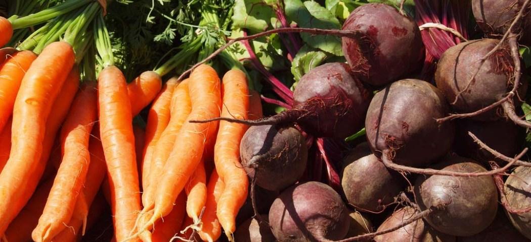 Осенняя уборка урожая моркови, фото