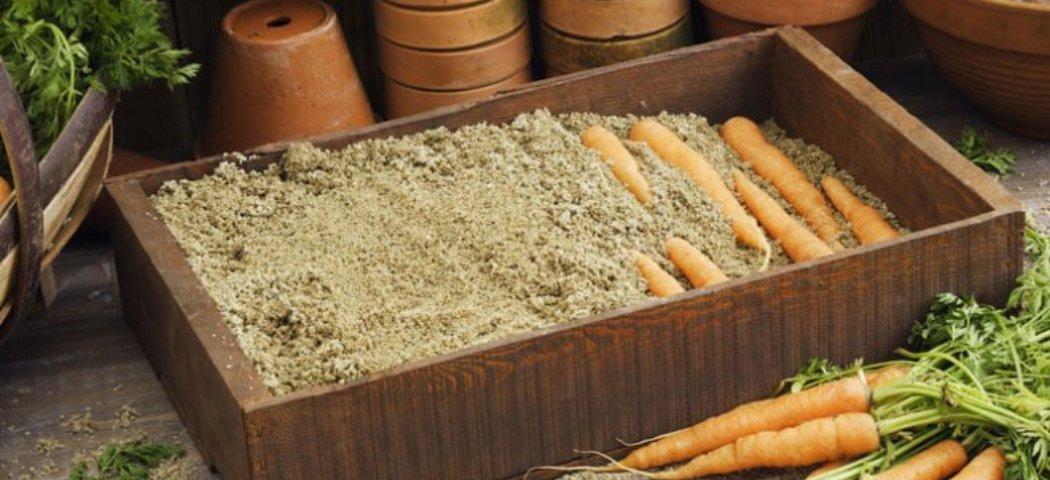 Домашнее хранение моркови и свеклы, фото