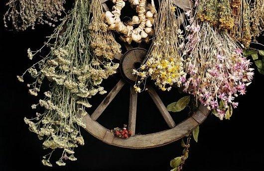Когда и как собирать лекарственные растения и травы, фото
