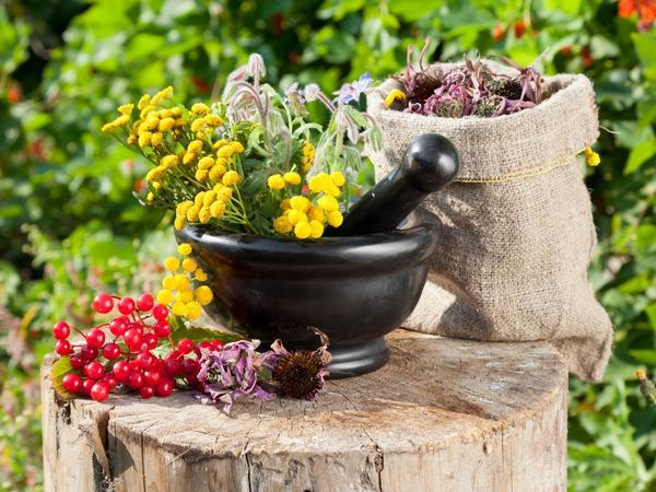 Сбор и хранение лекарственных растений, фото