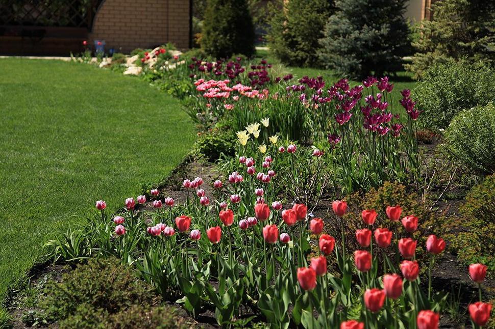 Весінній міксбордер із тюльпанами, фото
