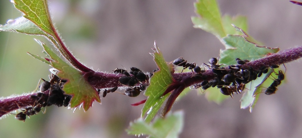 Как бороться избавиться от муравьев, фото