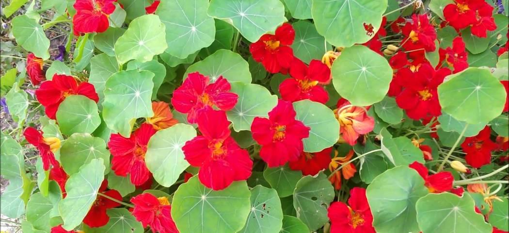 Что посеять летом все время цветет семена, фото