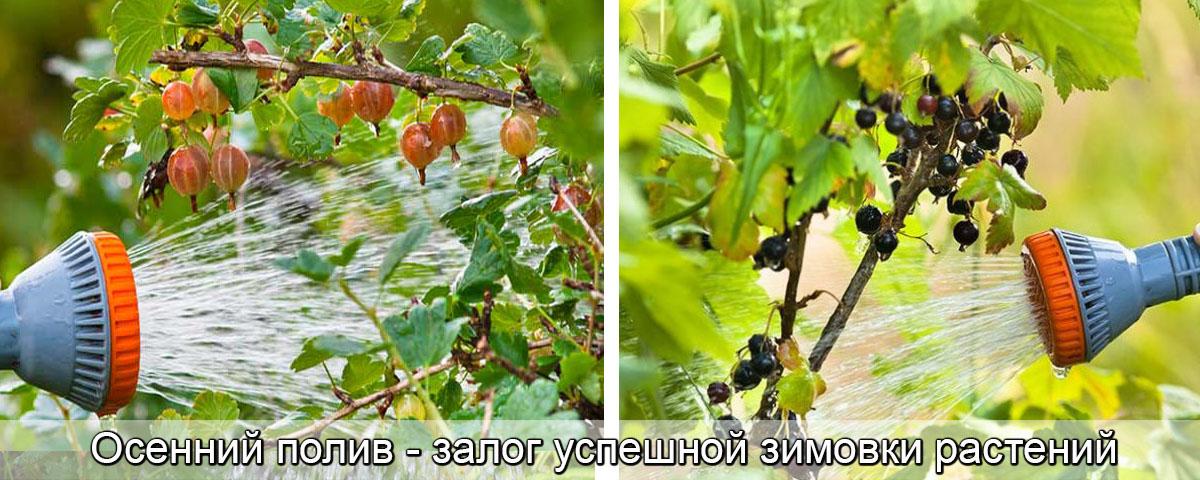 удобренияю осенью плодовые деревья, фото