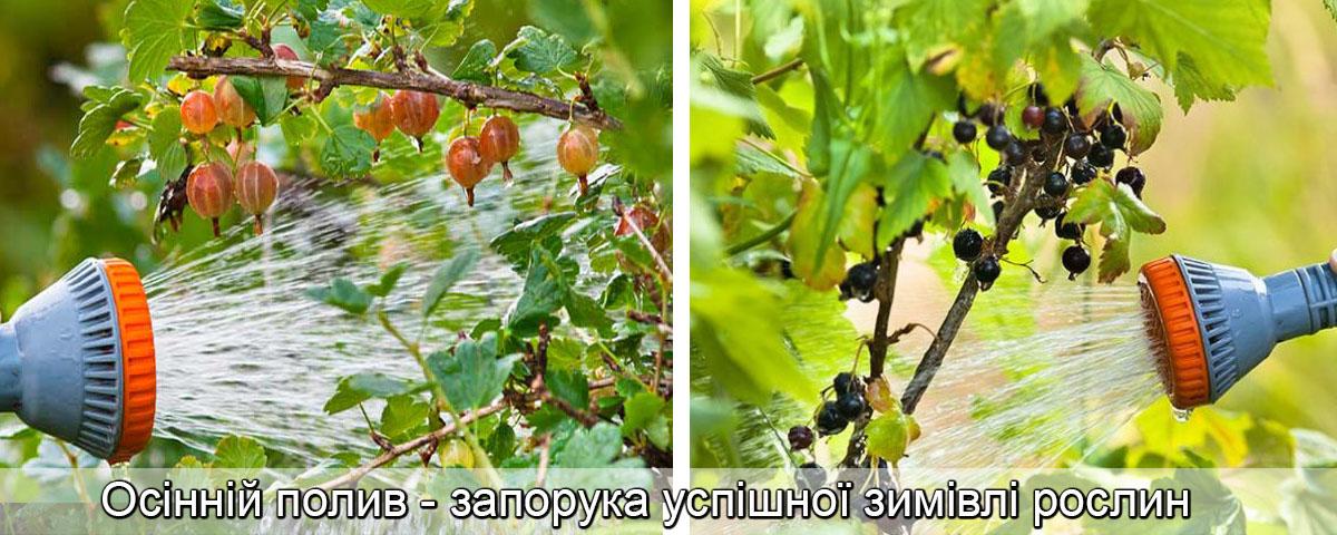 добрива восени для плодових дерев, фото