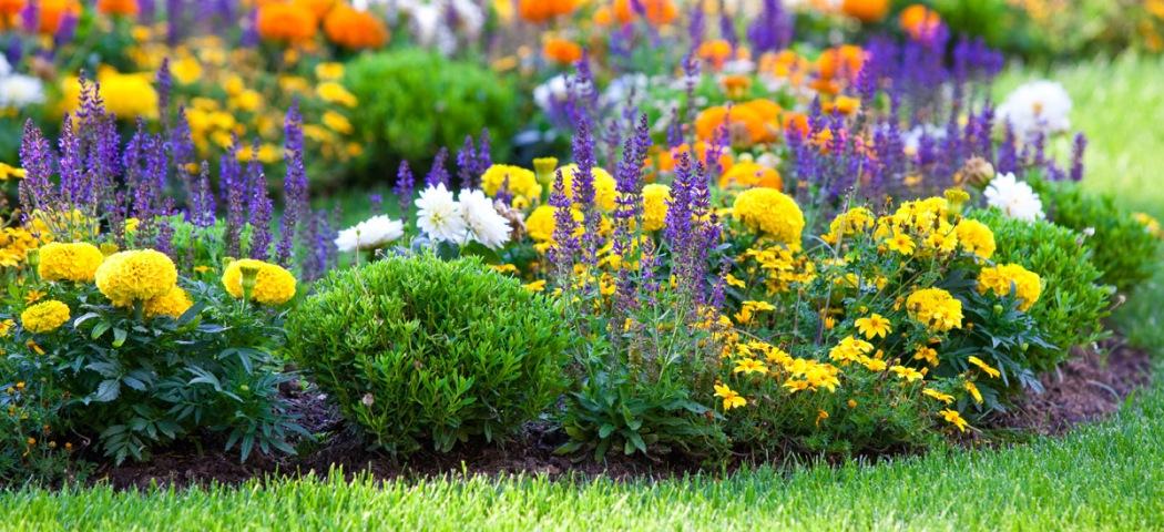 Садовые композиции растений для проблемных мест сада, фото