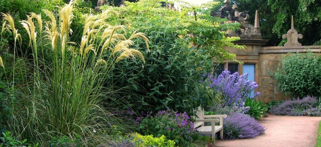 Растения для проблемных мест в саду. фото