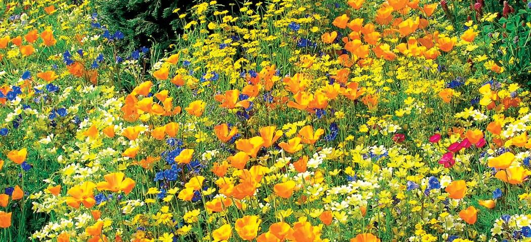 Проблемы в саду, решения для лужайки и газона, фото