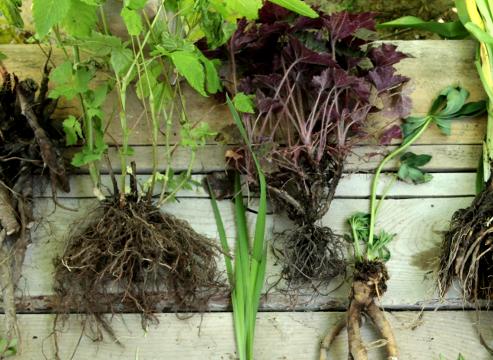 Обробка розсади до посадки протруйники