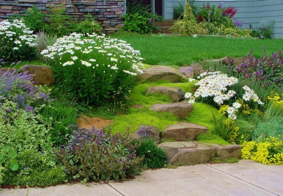 Ромашка многолетние в дизайне сада, фото