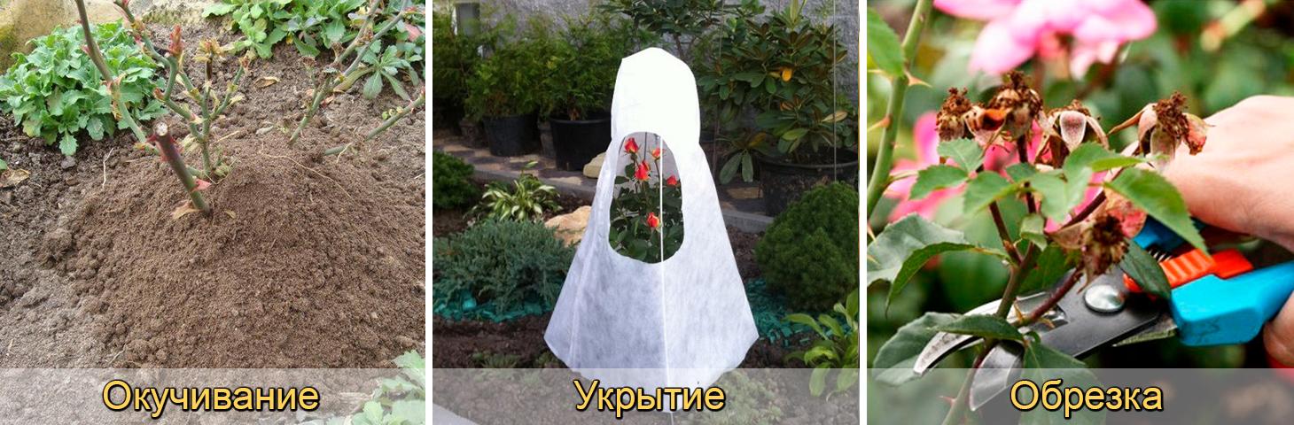 Окучивание, обрезка, укрытие роз на зиму осенью
