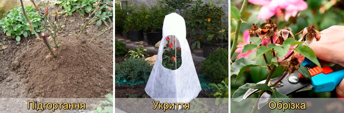 Підгортання, обрізка, укриття троянд на зиму восени, фото