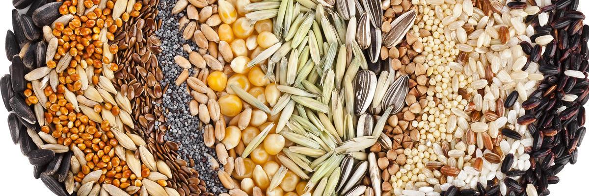 Скільки насіння в 1 г / грамі, фото
