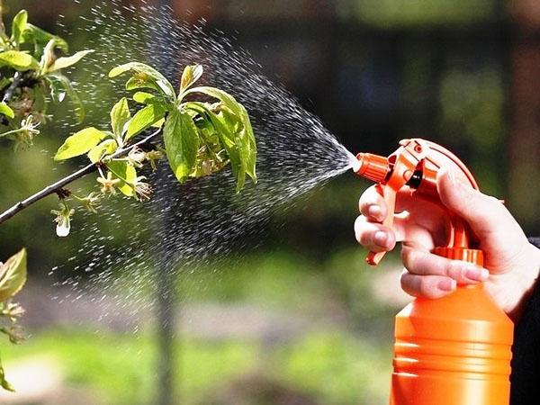 Засоби та препарати від попелиці, інсектициди для саду. фото