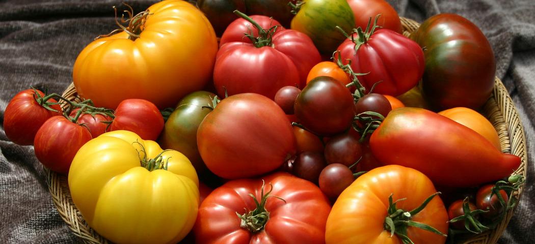 Томати, види, типи, сорти помідорів, фото