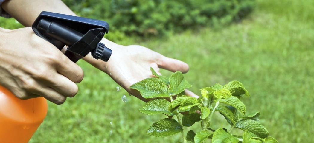 Садові препарати засоби хімія від шкідників яблуні груші, фото