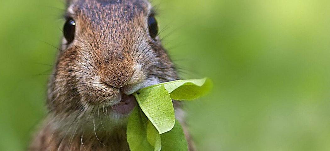 защита деревьев от зайцев, фото