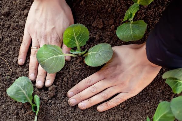 Основные работы в саду в июне: особенности ухода за растениями в период вегетации