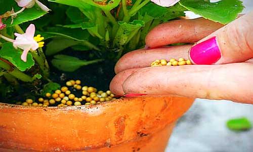 Подкормка растений в зимнее время