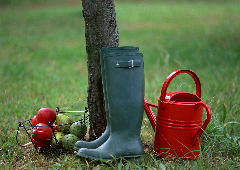 Календар садовода: основні работи в саду в вересні