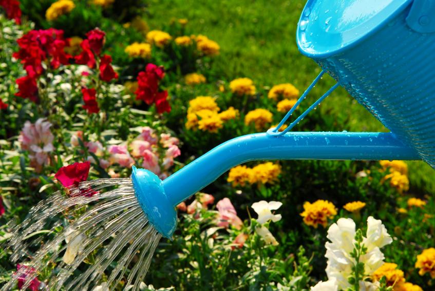 Основные работы в саду в июле: встречаем экватор лета
