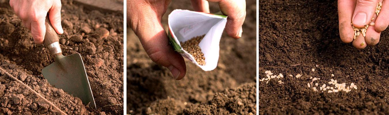 Сроки и технология подзимнего посева