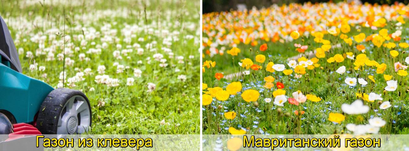 Мавританский газон