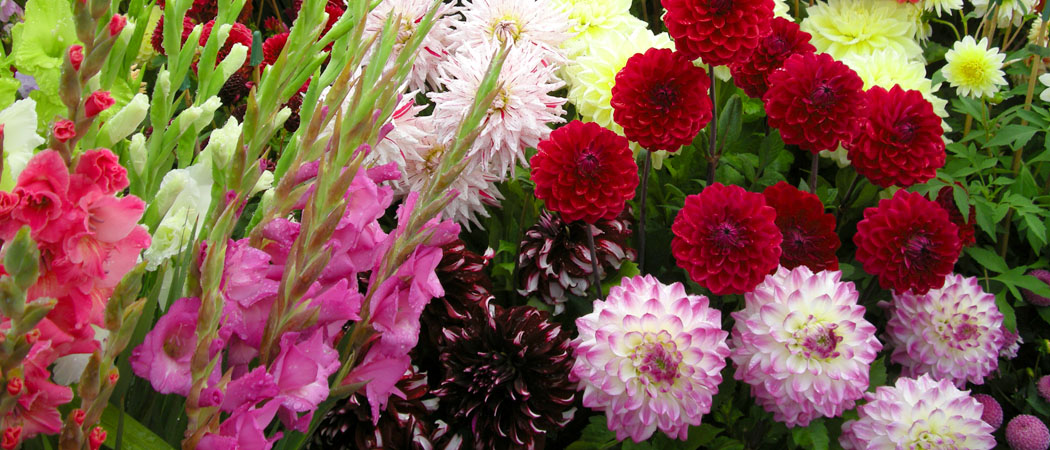 Лилии, гладиолусы: хранение клубней и луковиц зимой