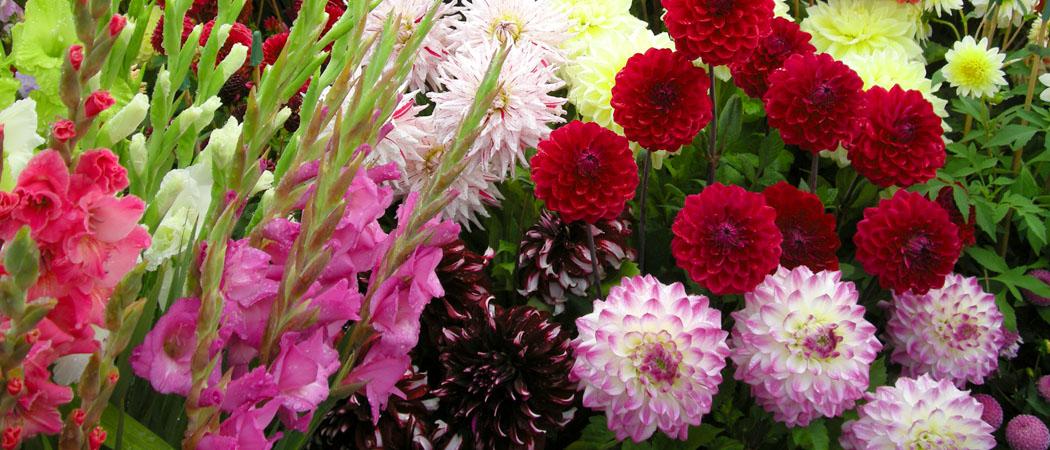 Гладиолусы и лилии, хранение