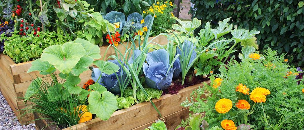 Красивый современный огород, фото