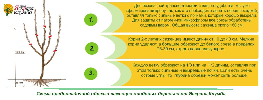 Схема и правила обрезки
