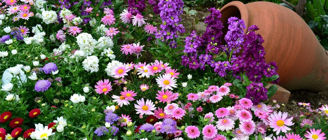 Посев цветов под зиму