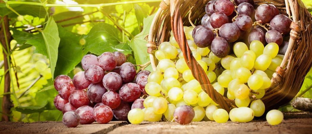 Виноград, защита от болезней