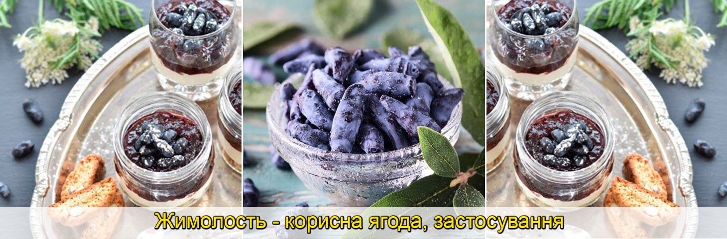 саджанці жимолості їстівної, ягоди, фото