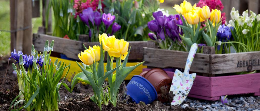 Осенняя посадка луковичных: тюльпанов, нарциссов, гиацинтов