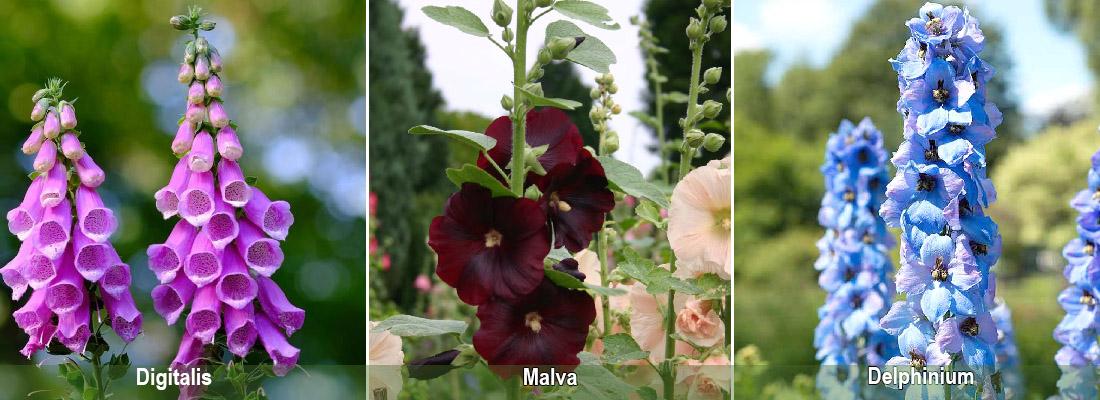 Цветы-свечи, Дигиталис (Наперстянка), Мальва, Дельфиниум
