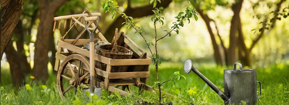 Почему деревья не дают прирост, фото