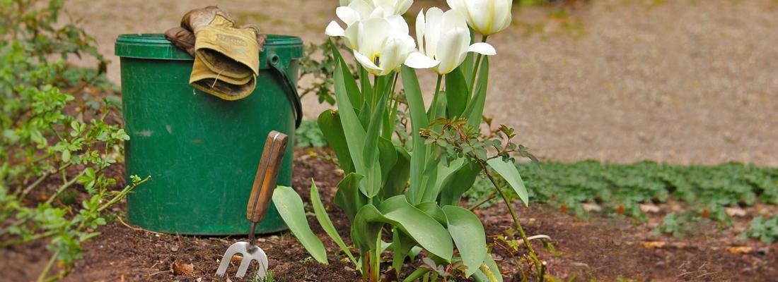 Весенние луковичные, уход и хранение