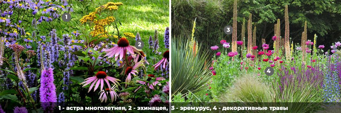 Засухоустойчивые растения для сада, фото